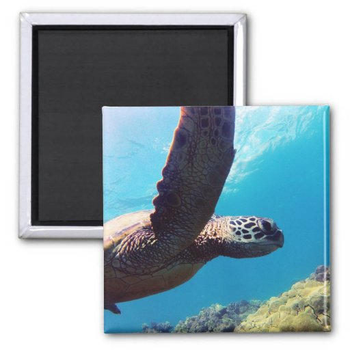 Hanauma Bay Hawaii Turtle Fridge Magnet