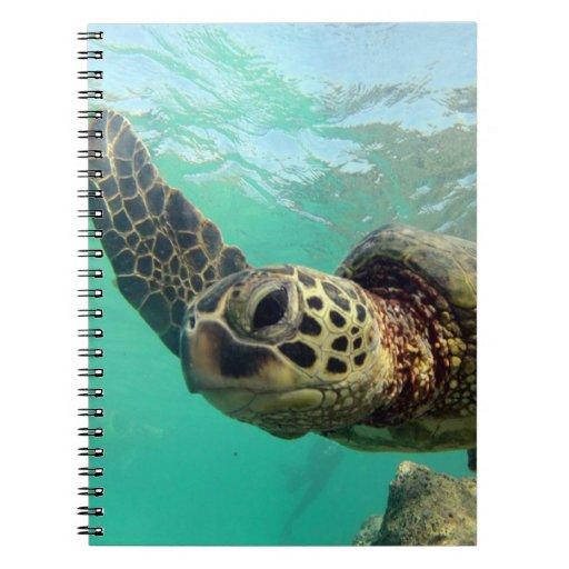 Hanauma Bay Hawaii Turtle Journal