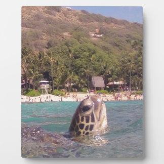 Hanauma Bay Hawaii Turtle Plaques