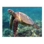 Hanauma Bay Hawaii Turtle Postcard