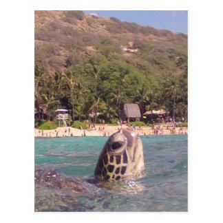 Hanauma Bay Hawaii Turtle Postcards