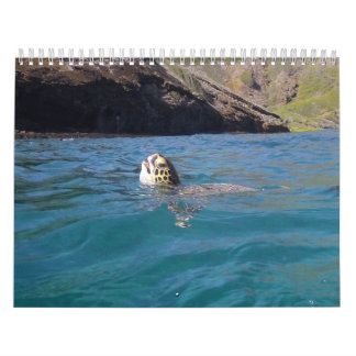 Hanauma Bay Hawaii Turtles Calendar