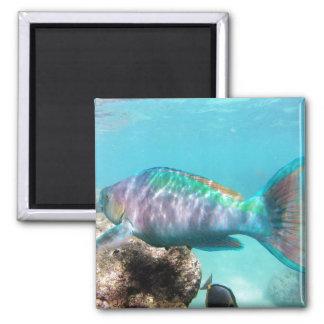 Hanauma Bay Oahu Hawaii Parrot Fish Magnet