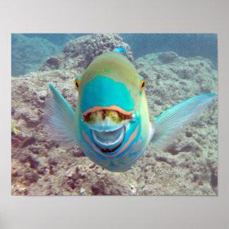 Hanauma Bay Parrot Fish Poster