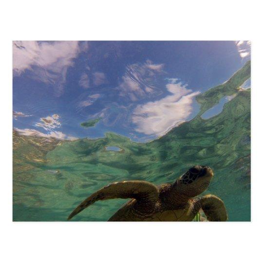 Hanauma Bay Turtle Postcard