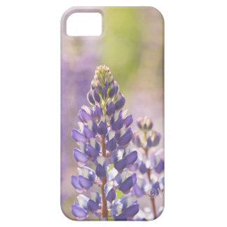 Hancock County Lupines .jpg iPhone 5 Cases