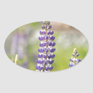 Hancock County Lupines .jpg Sticker