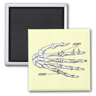 Hand Bones Joint Diagram 2 Inch Square Magnet