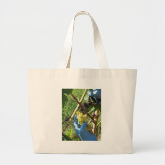 Hand cutting white grapes, harvest time large tote bag