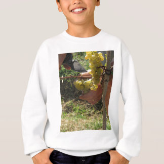 Hand cutting white grapes, harvest time sweatshirt