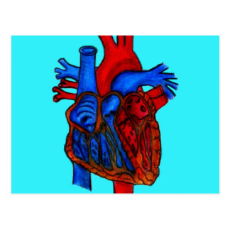 Hand Drawn Aqua Anatomical Heart Postcard