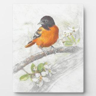 Hand Drawn Oriole Bird Illustration Plaque
