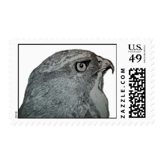 hand drawn red tailed hawk postage stamp