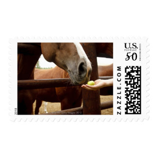 Hand feeding a horse an apple. postage