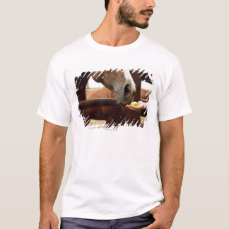 Hand feeding a horse an apple. T-Shirt