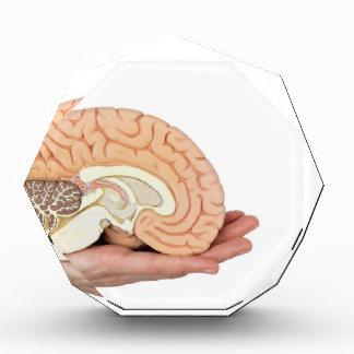 Hand holding brain hemisphere on white background award