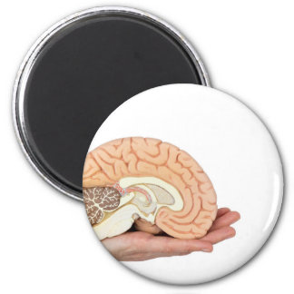 Hand holding brain hemisphere on white background magnet
