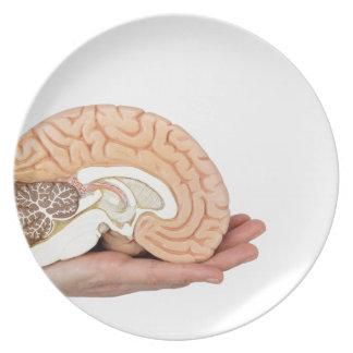 Hand holding brain hemisphere on white background plate