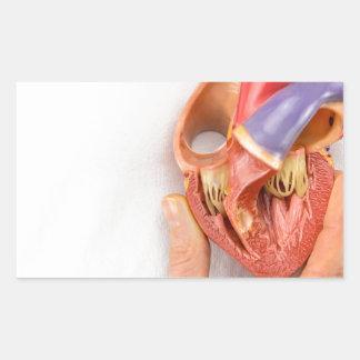 Hand holding heart model in front of chest rectangular sticker
