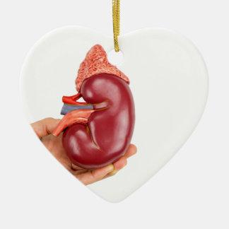 Hand holding kidney model on white background ceramic ornament