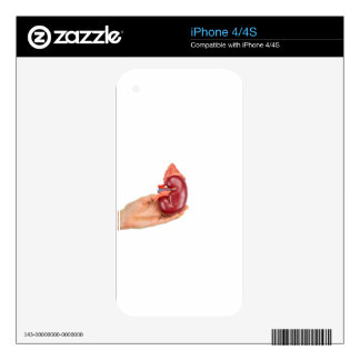 Hand holding kidney model on white background decal for the iPhone 4S