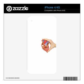 Hand holding model open human heart on white.jpg skins for iPhone 4S