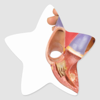 Hand holding model open human heart on white.jpg star sticker