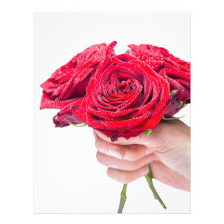 Hand holding red roses with water drops letterhead