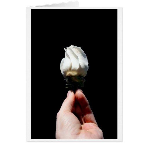 Hand holding white rose bud black background stationery note card