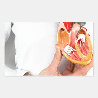Hand holds human heart model at body rectangular sticker