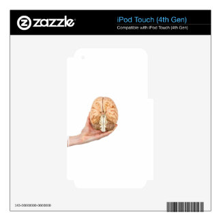 Hand holds model human brain on white background iPod touch 4G decal