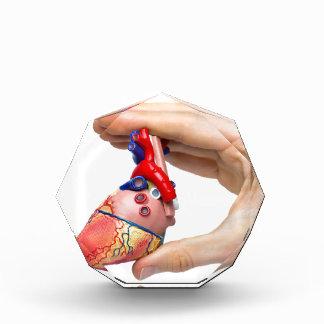Hand holds model human heart between fingers award