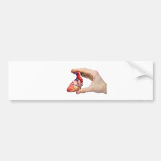 Hand holds model human heart between fingers bumper sticker