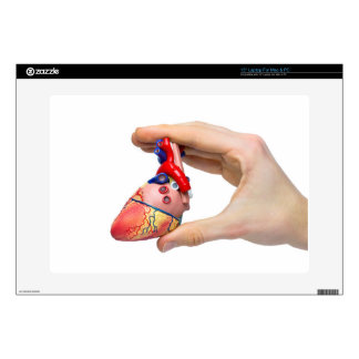 Hand holds model human heart between fingers decals for laptops