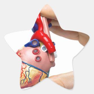 Hand holds model human heart between fingers star sticker