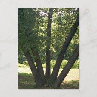 Hand Of Nature Postcard postcard