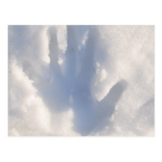 Hand-print-in-snow1686 WINTER SNOW HAND PHOTOGRAPH Postcard