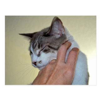 hand scratching kitten cute cat design postcard