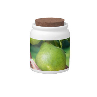 Hand showing branch with hanging green pears candy jars