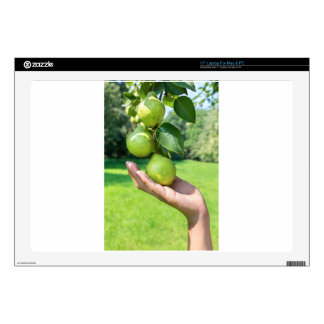 """Hand showing branch with hanging green pears decal for 17"""" laptop"""