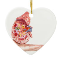 Hand showing model with inside of human kidney ceramic ornament