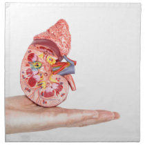Hand showing model with inside of human kidney cloth napkin