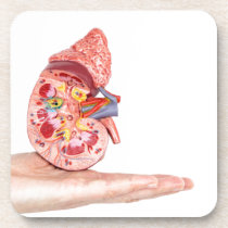 Hand showing model with inside of human kidney drink coaster