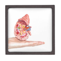 Hand showing model with inside of human kidney jewelry box