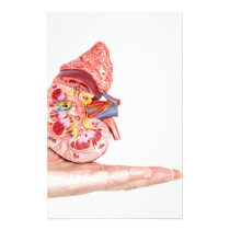 Hand showing model with inside of human kidney stationery