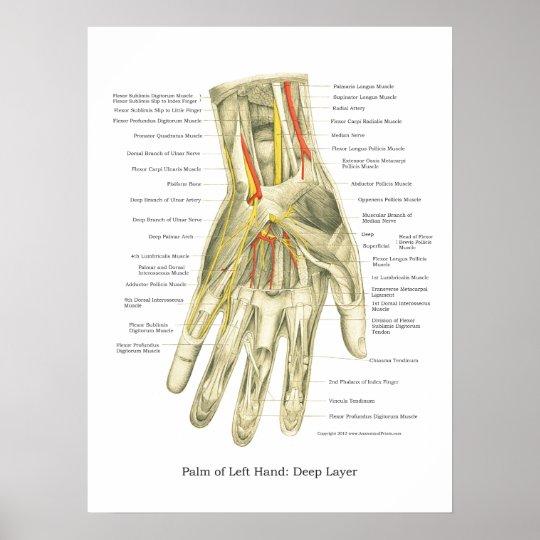 Hand & Wrist Internal Anatomy Poster | Zazzle.com