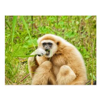 Handed Gibbon - Postcard
