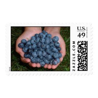 Handful of Fresh Blueberries Postage