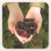 Handful of Mulberry Berries Fresh and Sweet Square Paper Coaster