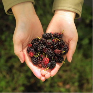 Handful of Mulberry Berries Fresh and Sweet Statuette